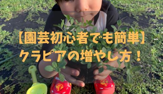 【園芸初心者でも簡単に出来る】クラピアの増やし方を写真付きで解説