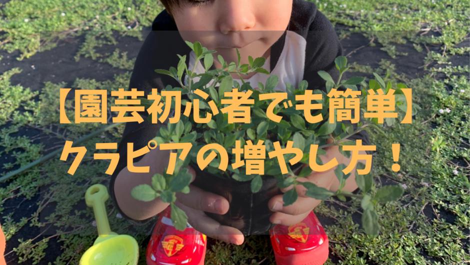 【園芸初心者でも簡単】クラピアの増やし方