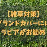 【雑草対策の植物は?】グランドカバーにはクラピアがお勧め!